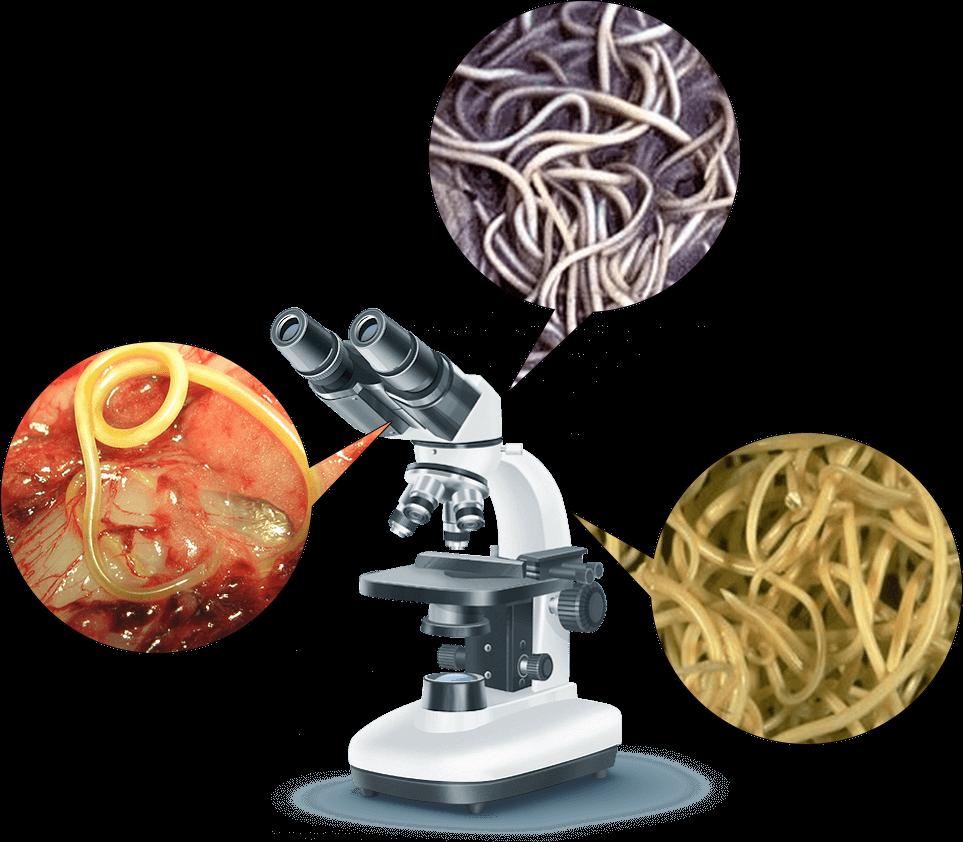 Germitox, funziona, ingredienti, composizione, come si usa